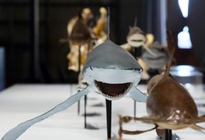 sharks monaco