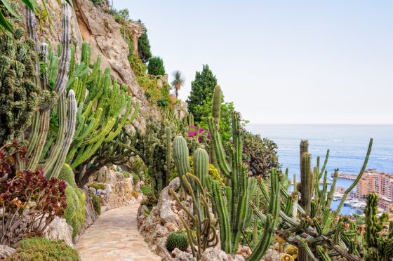 things-to-do-in-monaco-jardin-exotique